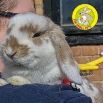 Small Animal Slicker Brush