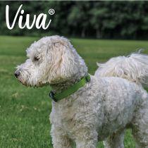 Viva Adjustable Collar Lime 45-70cm Size 5-9